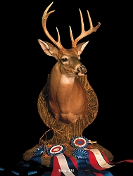 Whitetail Taxidermy Form 425 at Foster Taxidermy Supply